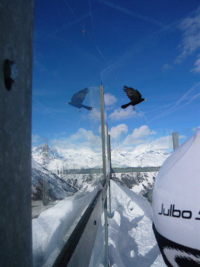 black bird in flight reflected in a glass screen against a blue sky and snow covered alpine background
