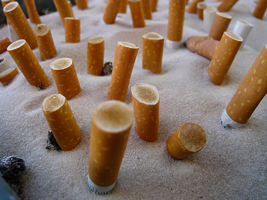 close-up picture of rows of stubbed out cigarettes standing in an ashtray