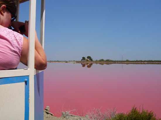 tourist wearing a pink tee shirt taking a photo of a pink lagoon