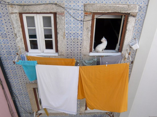 appartment façade - white cat sitting in an open window and bed sheets drying